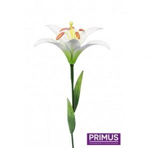 Medium Lily White